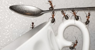 ants-in-the-kitchen