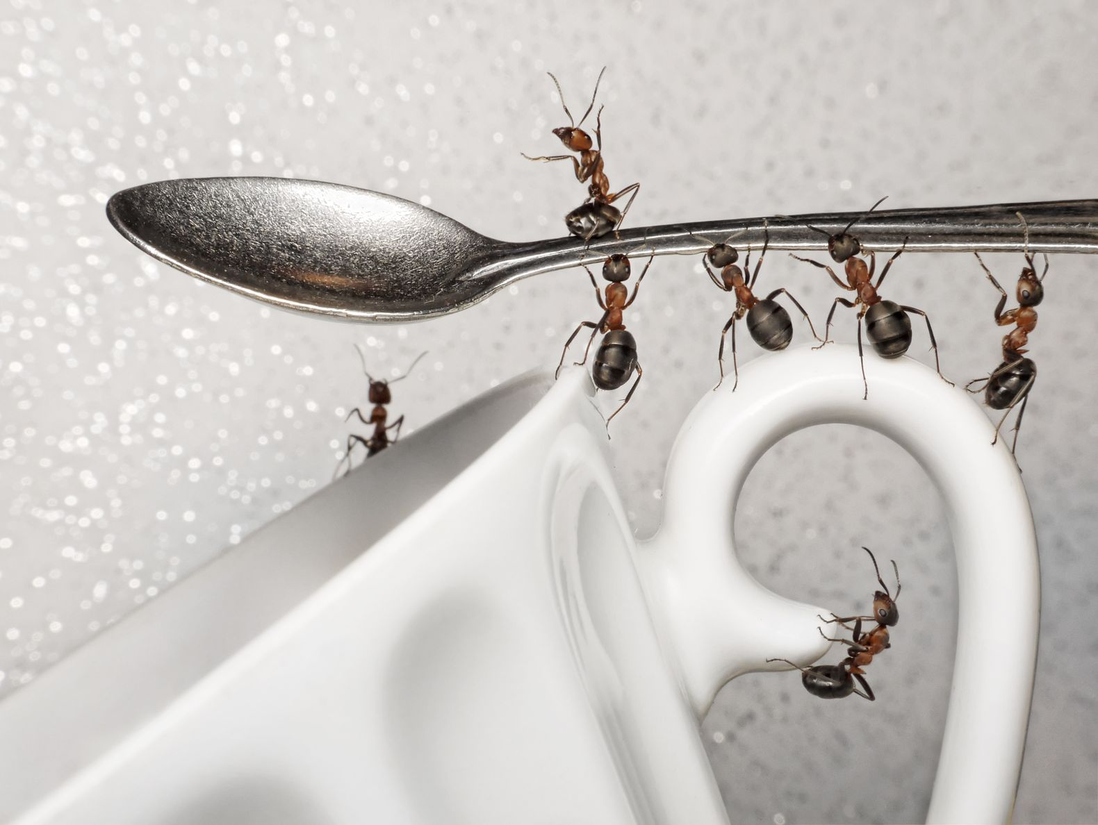 How To Get Rid Of Ants In The Kitchen - A Very Cozy Home