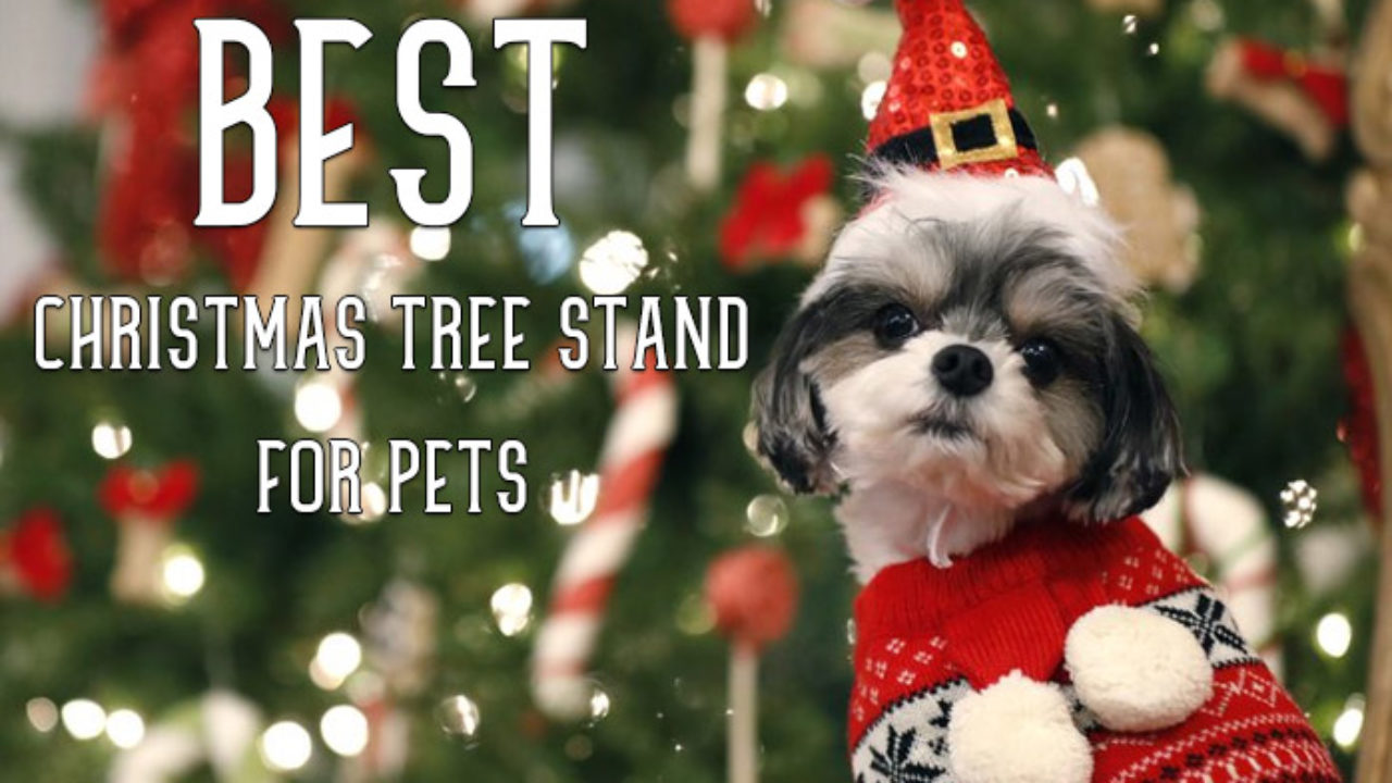 Best Christmas Tree Stand.Best Christmas Tree Stand For Pets Dogs And Cats A Very