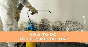 how to do mold remediation