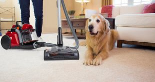 cleaning pet hairs at home