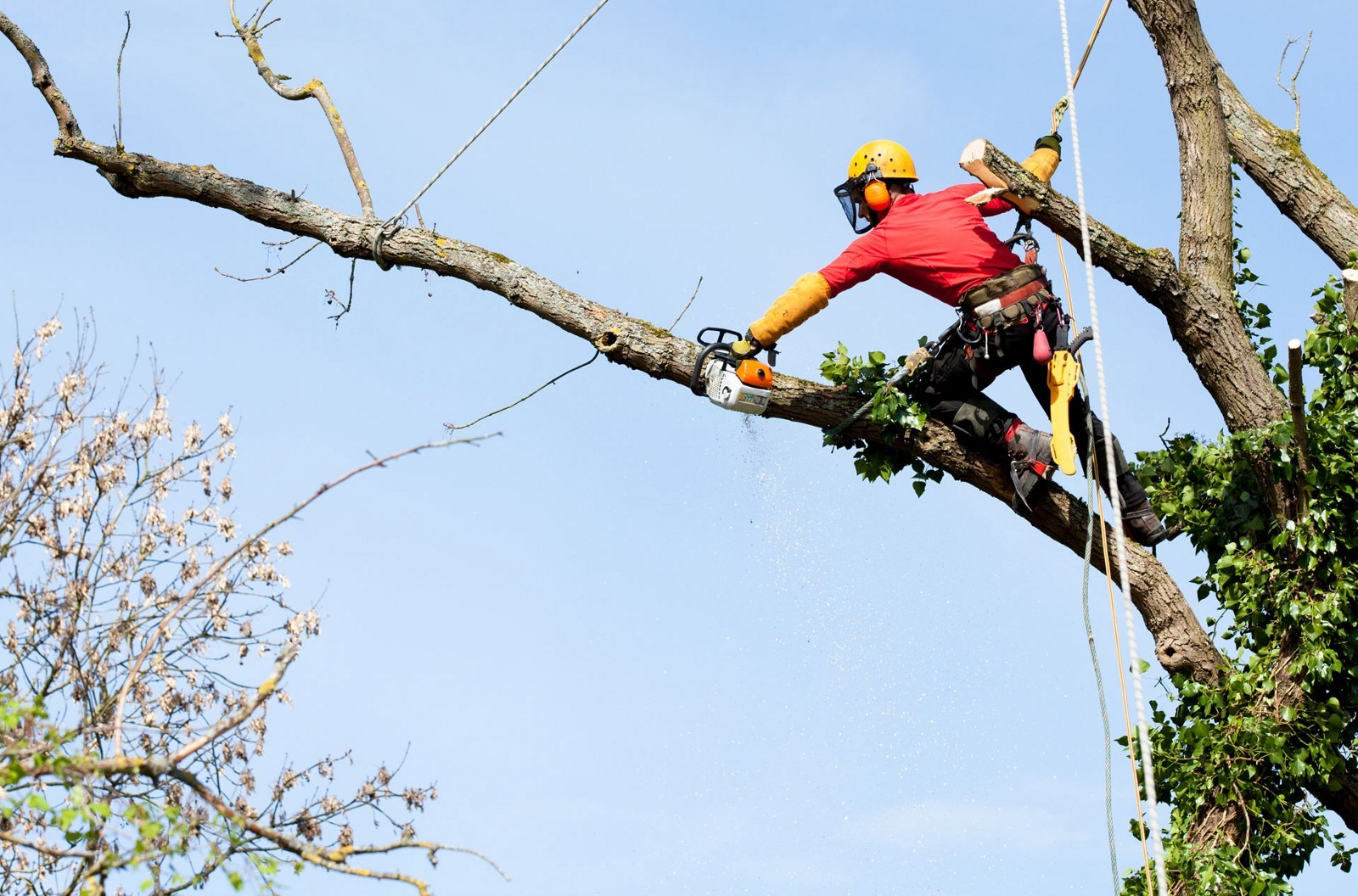 Most Compelling Reasons Why You Need Arborist's Help