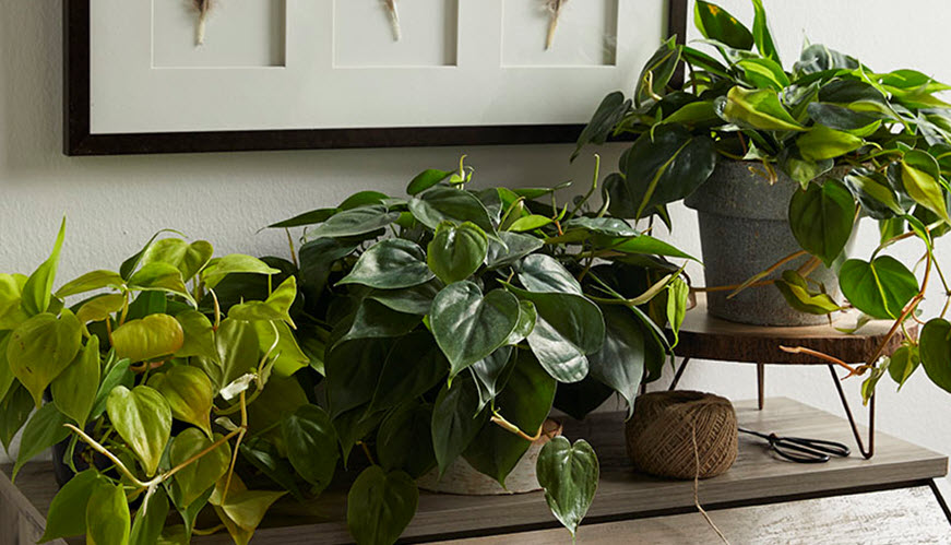 green plants in pots in the home