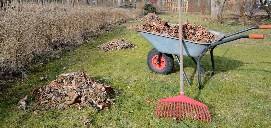 Clear the weeds and dead leaves