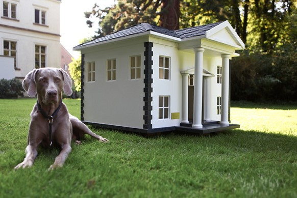 Effective Tips On How To Look For House Sitters For Your Pets