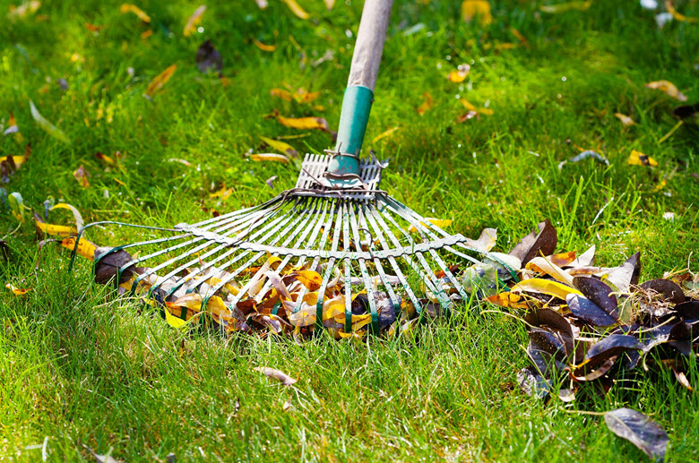raking the lawn for leaves