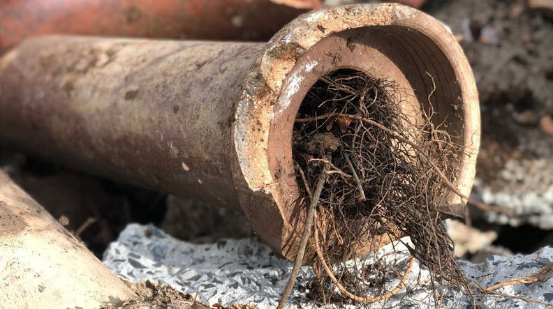 metal pipe filled with tree roots