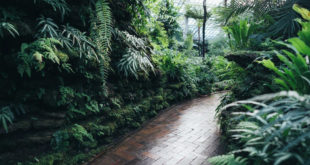 How to Make a Tropical Garden At Home