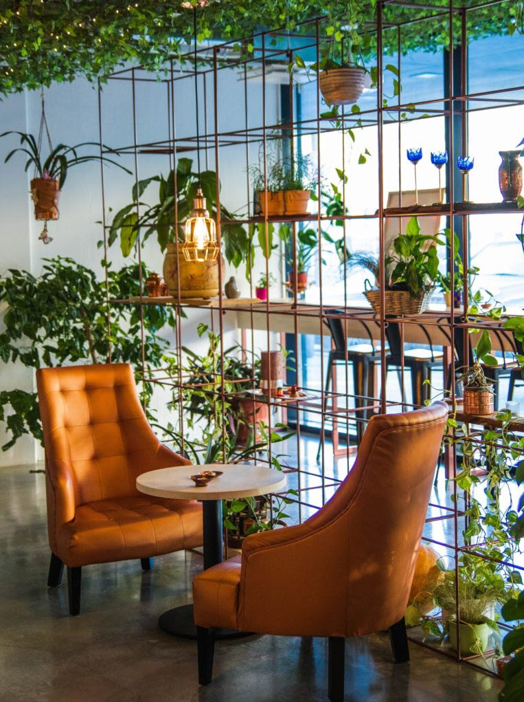 cozy indoor garden with hanging plants and leather armchairs