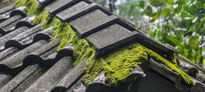 Make sure that your roof doesn't have moss