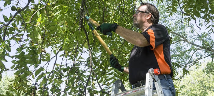 Remove the overhanging branches