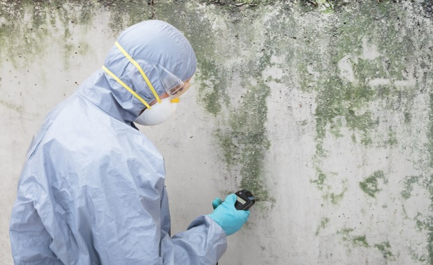 Wall Mold Removal