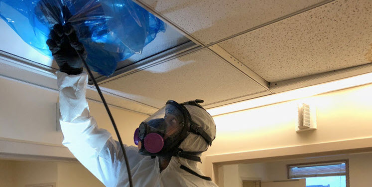 air duct cleaning expert