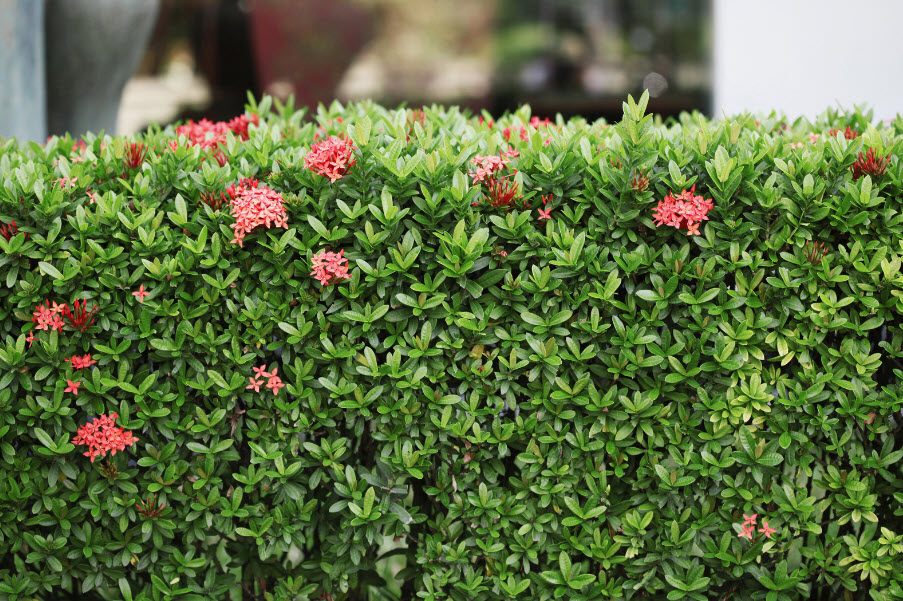 Tips for Maintaining Garden Hedges