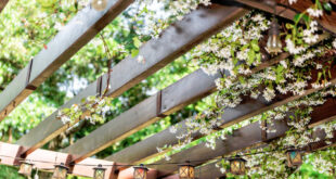 what is pergola used for
