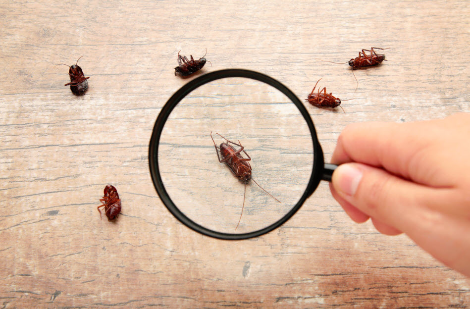 keep pests away from home